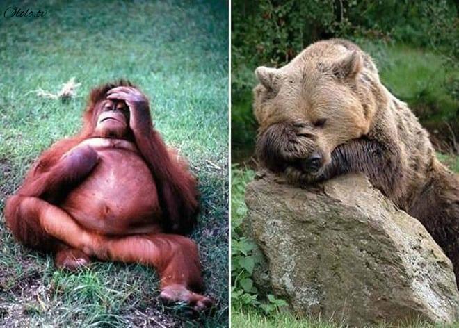 Фотографии животных, которые напоминают людей после бурных вечеринок рис 10
