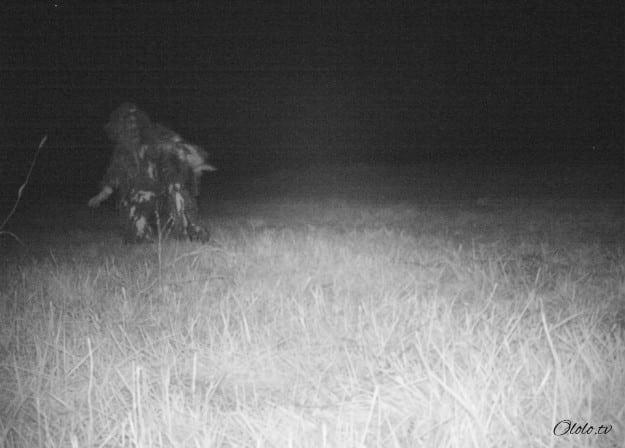 Полиция установила камеру ночного видения, чтобы найти пуму, но ситуация вышла из-под контроля рис 7