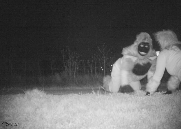 Полиция установила камеру ночного видения, чтобы найти пуму, но ситуация вышла из-под контроля рис 8