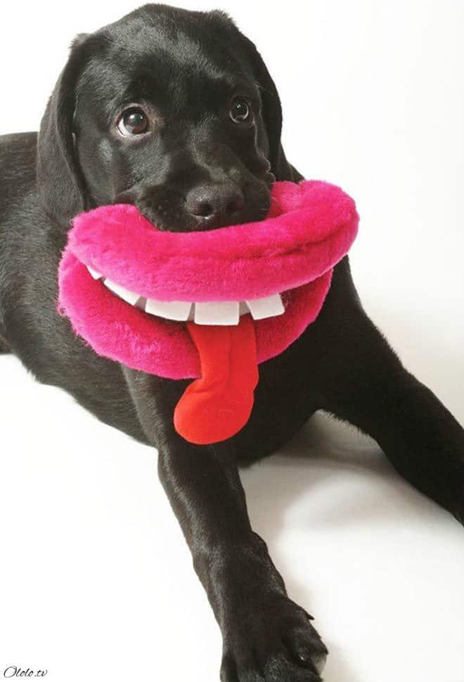 15 собак со своими нелепыми игрушками