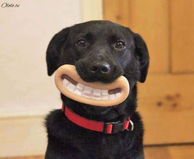 15 собак со своими нелепыми игрушками рис 5