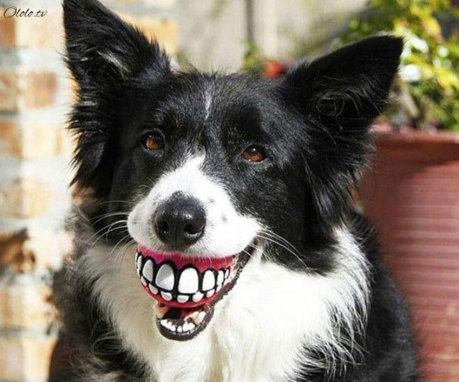 15 собак со своими нелепыми игрушками рис 4