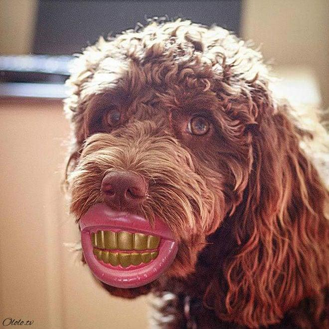 15 собак со своими нелепыми игрушками рис 3