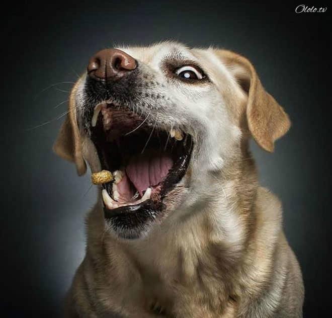Смешные фотографии собак, которые ловят еду