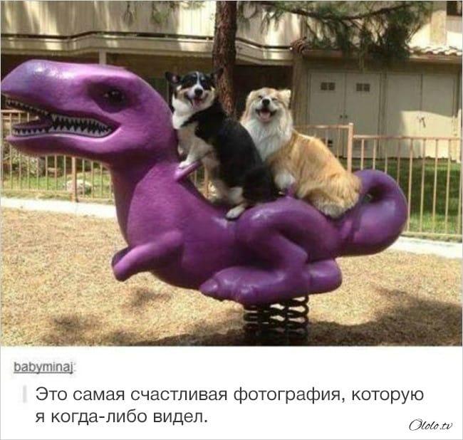 14 доказательств, что интернет и животные созданы друг для друга