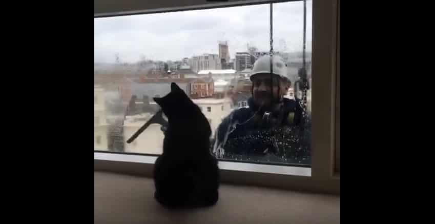 Кот, который действительно наслаждается мытьем окон. Видео