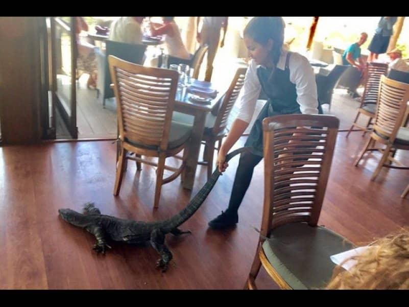 Смелая австралийская официантка вышвырнула варана из переполненного ресторана. Видео