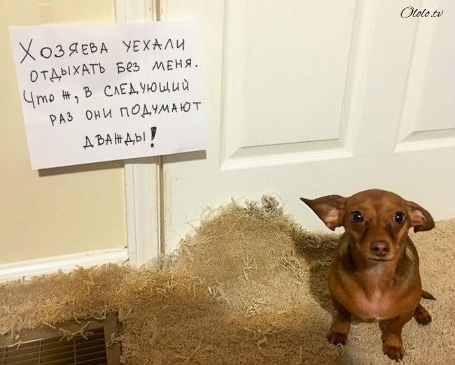 17 собак, которые больше так не будут. Наверное рис 5
