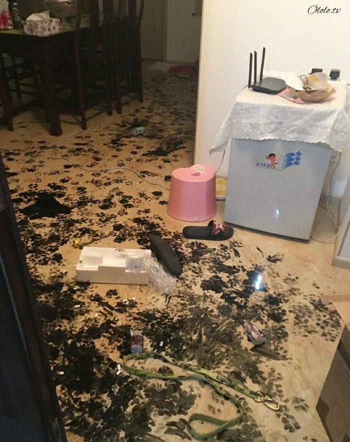 Хаски оставили одного на три часа, и вот что он сделал с домом