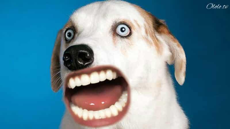 Что фотошоперы натворили с этими несчастными животными? 15 фото