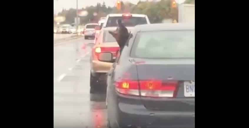 Пёс в восторге от дождя и ртом хватает капли на лету. Видео