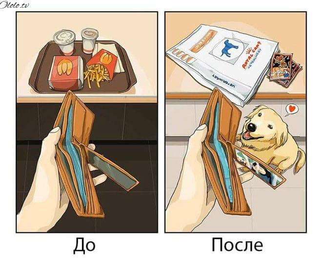 Ваша жизнь до и после появления собаки в картинкахВаша жизнь до и после появления собаки в картинкахВаша жизнь до и после появления собаки в картинках