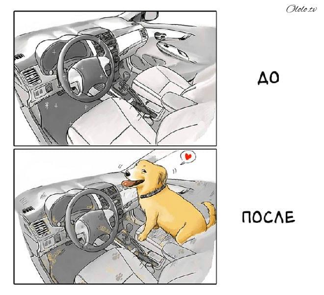 Ваша жизнь до и после появления собаки в картинках рис 5