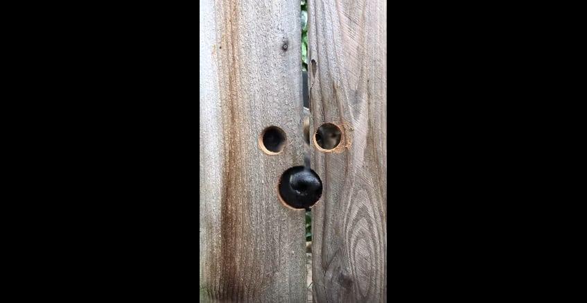 Благодаря простой идее, жительница Калифорнии осуществила мечту собаки видеть всё, что происходит за соседским забором. Видео