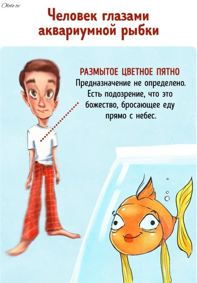 9 иллюстраций о том, как мы выглядим в глазах животных рис 4