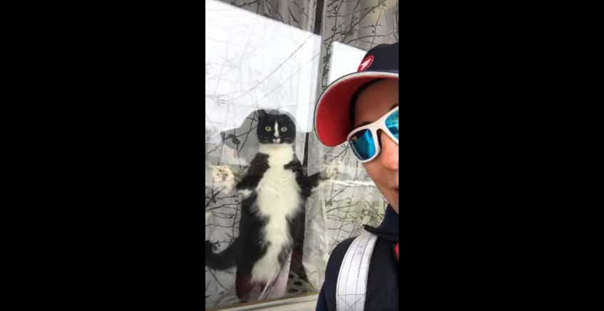 Почтальоны страдают не только от собак, но и от кошек! Видео