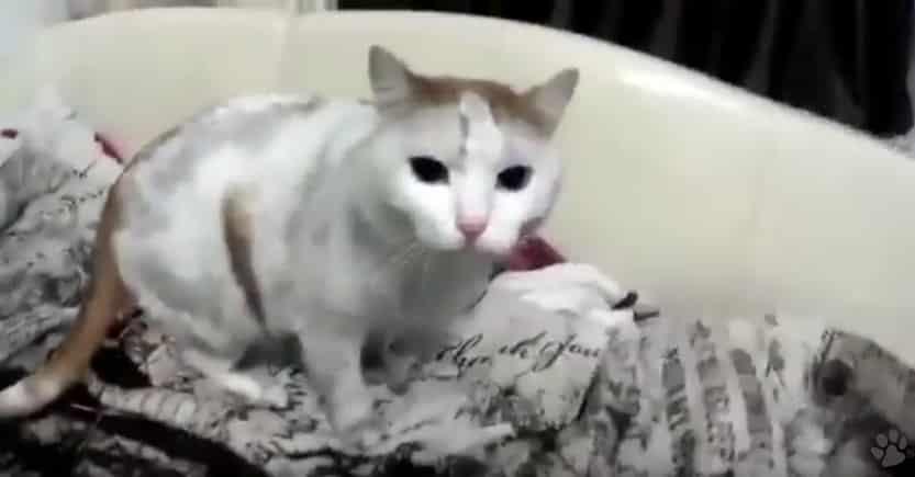 Кот кочегар и лабрадор. Видео