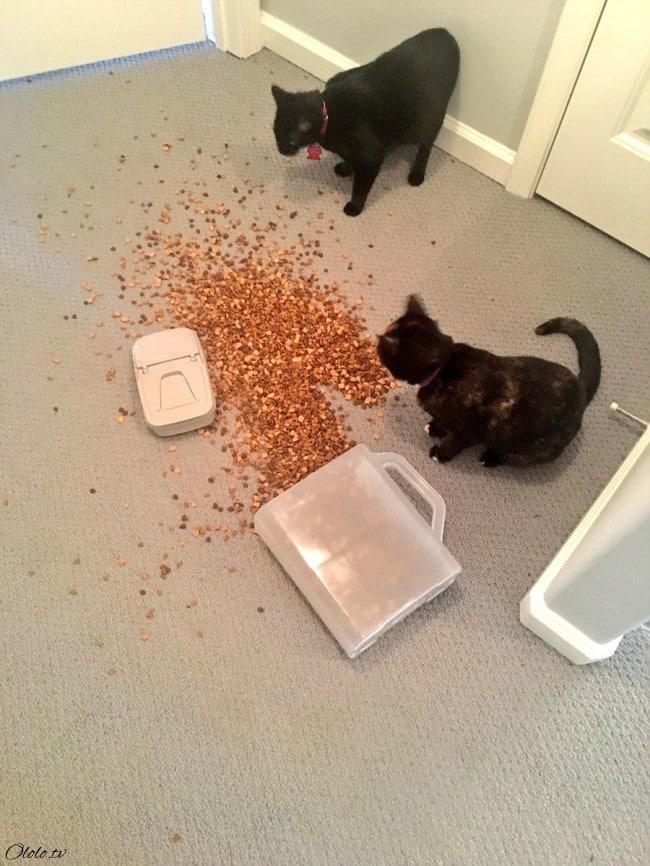 15 причин никогда не заводить котиков рис 3