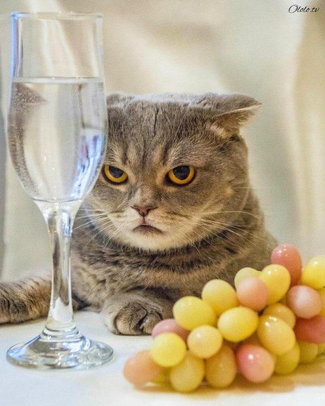 15 причин никогда не заводить котиков рис 2