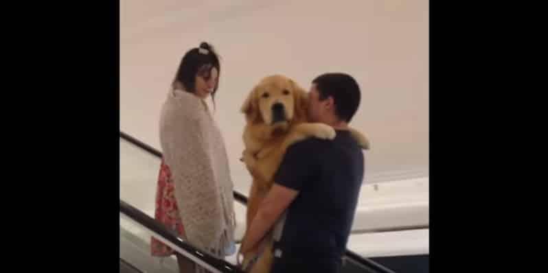 Собака, которая боится подниматься на эскалаторе. Видео