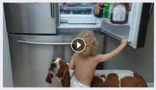 Верный четвероногий друг помог маленькой девочке добраться до холодильника.
