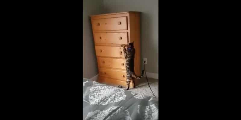 Когда твой кот умеет играть в прятки. Видео