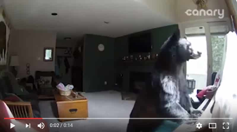 """Медведь забрался в дом и """"сыграл"""" на пианино. Видео"""
