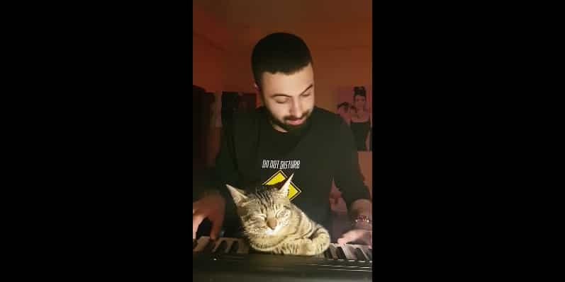 Колыбельная для котика: музыкант убаюкал своего пушистого питомца игрой на пианино. Видео