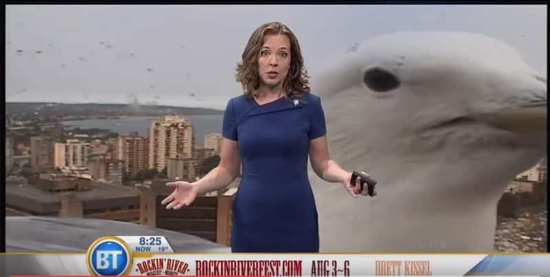 В Канаде чайка прервала прогноз погоды. Видео