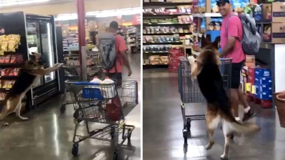 Пёс, которого не хватает каждой хозяйке! Видео