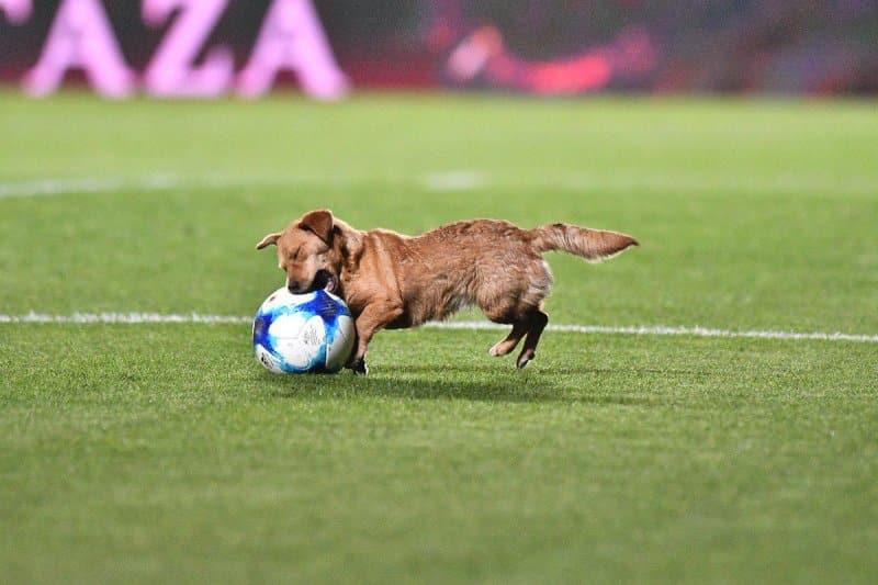 Жизнерадостный уличный пёс отобрал мяч у футболиста во время матча чемпионата Аргентины