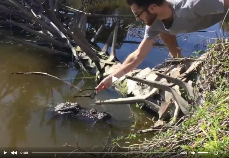 Реакция аллигатора на очки. Видео