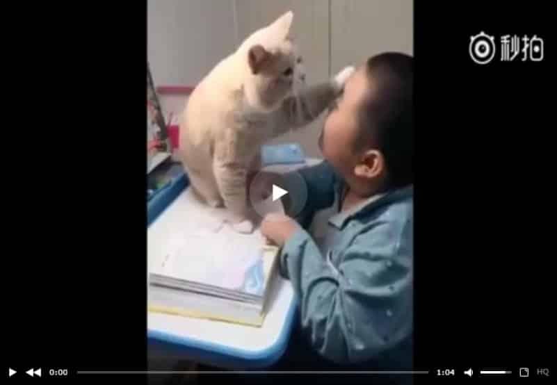 Очень ласковый кот мешает своему юному хозяину делать уроки. Видео