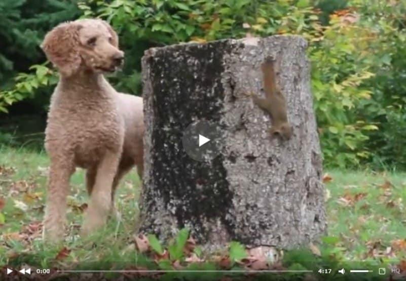 Бельчонок издевается над собакой. Видео