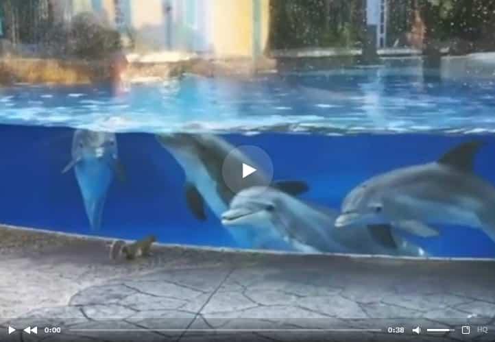 Дельфины засмотрелись на белок в океанариуме. Видео