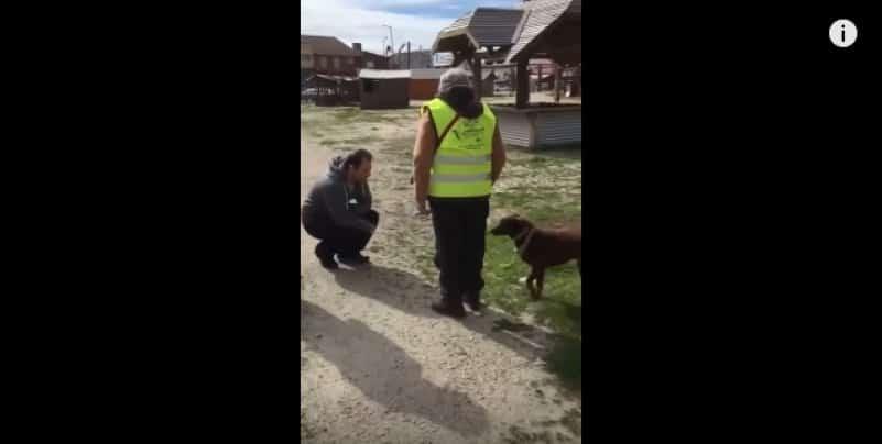Трогательная встреча собаки с хозяином после 3 лет разлуки. Видео
