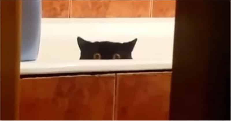 Кот украл свежую рыбу с кухонного стола и спрятался в ванной. Видео