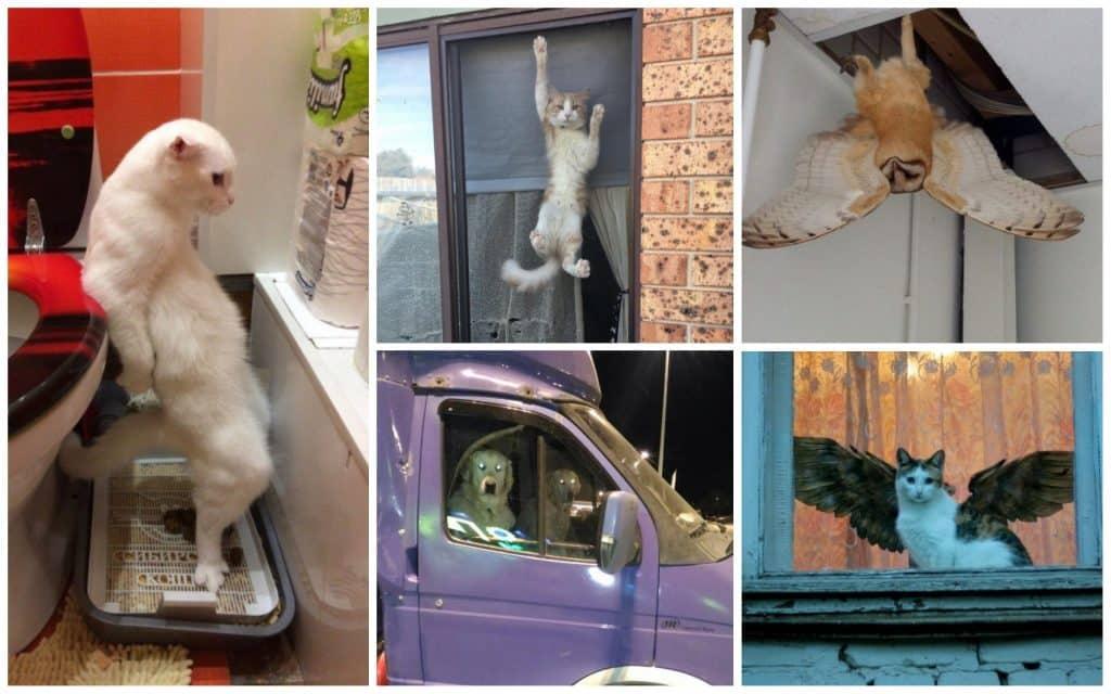 Внезапно! 26 фото животных, с которыми не соскучишься!