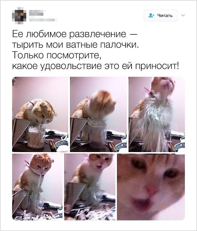 24 твита, которые доказывают, что жизнь с появлением животных меняется в лучшую сторону рис 7