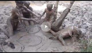 Суровые развлечения пакистанских детей. Видео