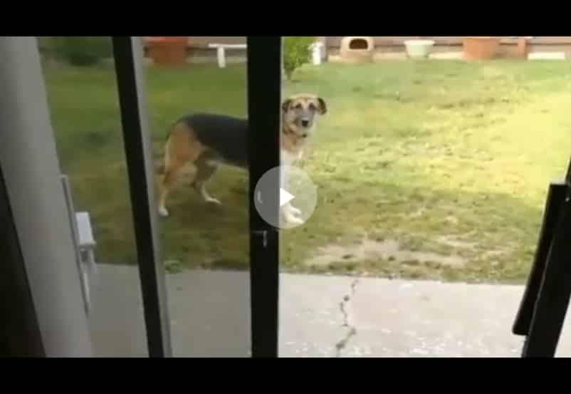 Ура, гулять! Собака очень торопилась на прогулку. Видео