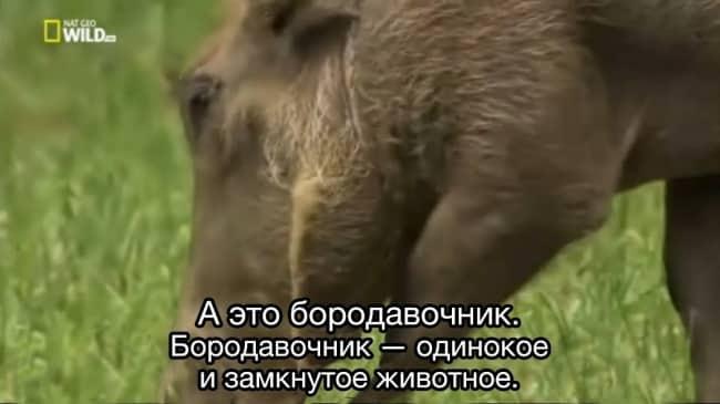 15 животных, в которых каждый из нас узнает себя или своих друзей! рис 14