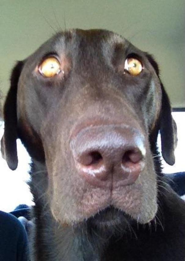15 собак, которые поняли, что их везут к ветеринару. Часть II