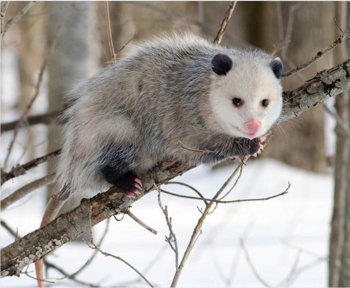 15 смешных отзывов о животных, если бы мы покупали их онлайн! Часть II