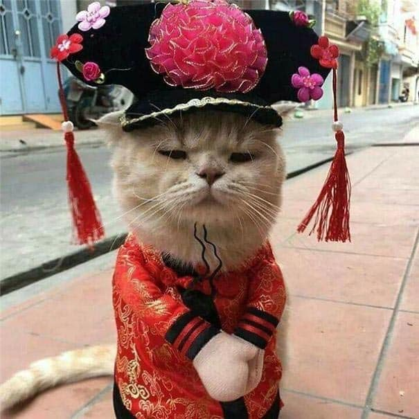 seller cat
