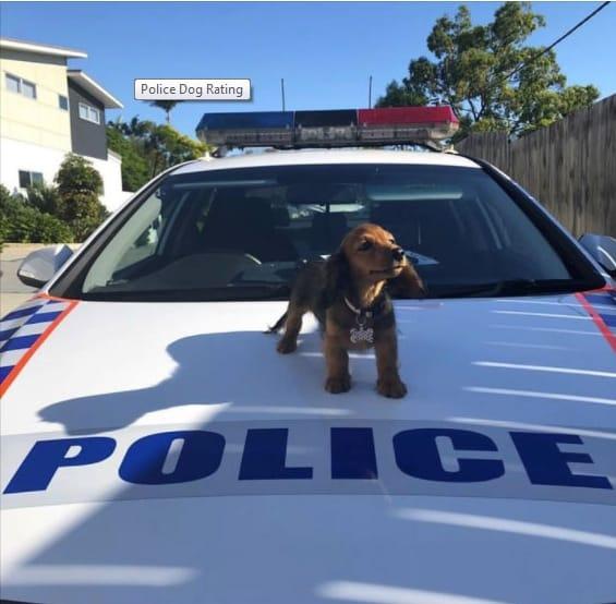 20+ доказательств, что у полицейских отличное чувство юмора! рис 3