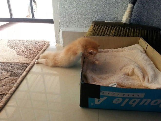 17 котов, в совершенстве овладевших искусством сна! рис 15