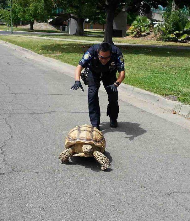 20+ доказательств, что у полицейских отличное чувство юмора! рис 15