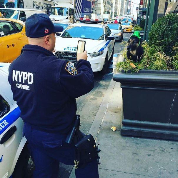20+ доказательств, что у полицейских отличное чувство юмора! рис 21