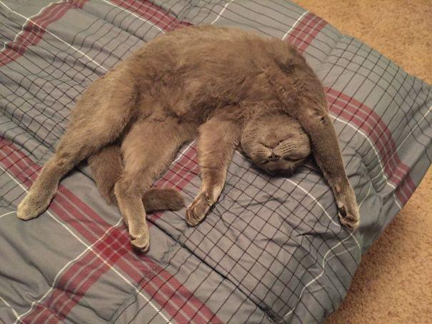 17+ смешных фото животных, вернувшихся от ветеринара домой